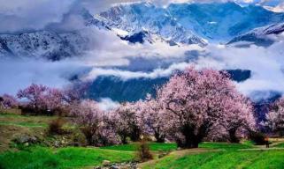 高原花儿开,静待游客来——西藏林芝首次启用5G直播呈现桃花美景