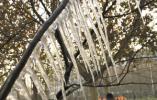 石家庄街头现玉树琼花 美景在长江大道与昆仑大街东北角
