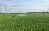 善乡兴农——陶庄镇全力提升现代农业 赋能美丽城镇建设