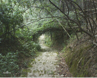 大围山国家森林公园