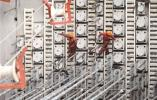 瓯江北口大桥凭什么刷新国内行业施工纪录?带你去工地一探究竟