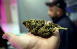 一年14家上市公司涉工业大麻 麻苗未种股价已翻番