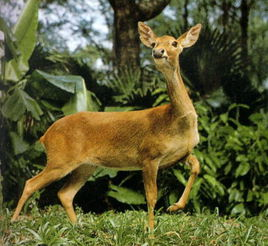 大田国家级自然保护区 图册