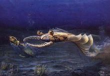 奇虾的猎食景观