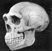 北京人头盖骨化石