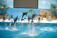 泉城海洋极地世界海豚表演