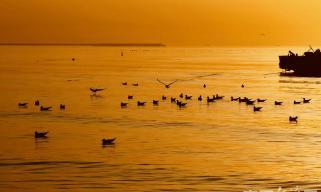 观日出喂海鸥 你和秦?#23454;?#30340;春天有个约会