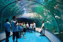 泉城海洋极地世界海底隧道