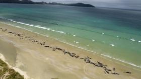 鲸类频繁搁浅的季节,有什么是我们需要知道的
